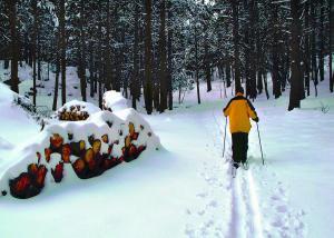 Snowbowl Skiing credit Discover Flagstaff