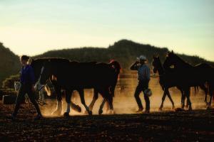 White Stallion Ranch SgrYQhqIEO345aq8IWztNtr18q0ABlZBh cmyk l