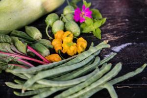 Local produce at Goshen Farm Aruba -1