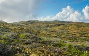 Landscape in Arikok National Park