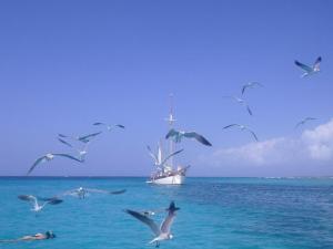Aruba-011