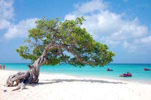 Aruba Tours to go-05