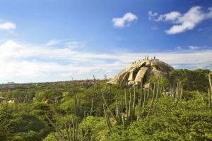 Aruba Tours to go-15