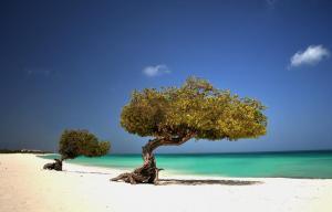 Aruba Tours to go-17