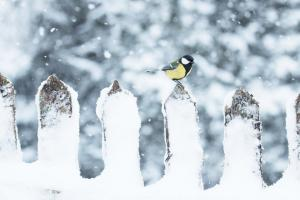 birdie-enjoying-winter 31677126838 o