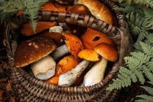 mushroom-basket 44635332245 o