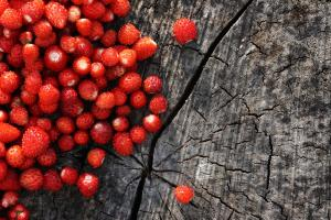 wild-strawberries 45549500161 o