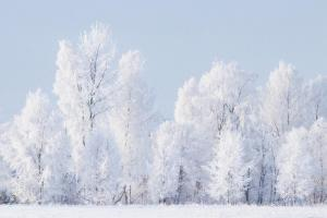 winter-forest 44635341575 o
