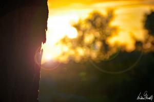 Sonnenuntergang an der Aller-07