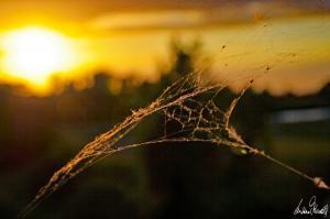 Sonnenuntergang an der Aller-08