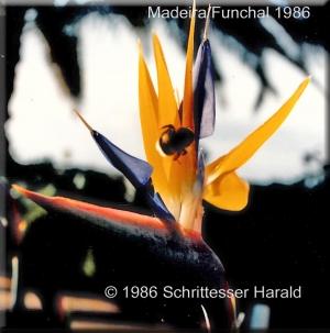 Madeira Dezember 1986-3-Kopie-1 bearbeitet-1