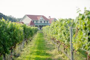 Vineyard 1 (c) Sannino Vineyard