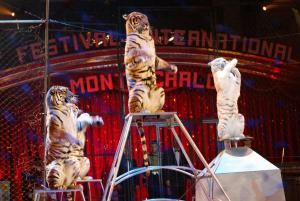 Festival Cirque3 300dpi