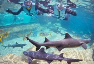 Discovery Cove Shark Swim