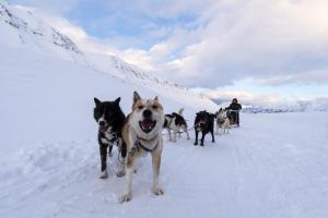 Green-Dog-dog-sledding-REN7688-3163571- Photo Renato Granieri