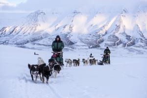 Green-Dog-dog-sledding-REX-3263-3163593- Photo Renato Granieri