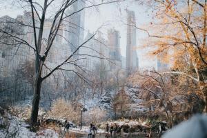 Central Park New York Caitlyn Wilson Unsplash