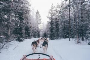 Rovaniemi Lappland fox-jia Unsplash