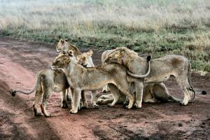 Serengeti Nationalpark Tansania joel-herzog-2Nvfrm2wLQY-unsplash