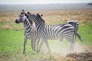 Serengeti Nationalpark Tansania little-john-Zd2SGrMOzdM-unsplash