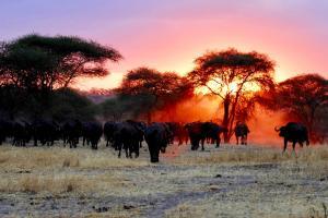 Serengeti Nationalpark Tansania ray-rui-0mqrqbwjKc4-unsplash