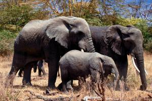 Serengeti Nationalpark Tansania ray-rui-jdMiuvHDUQU-unsplash