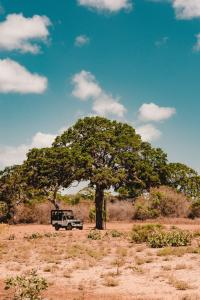 Yala Nationalpark unsplash fergus-so-c33FdqxHKxE-unsplash