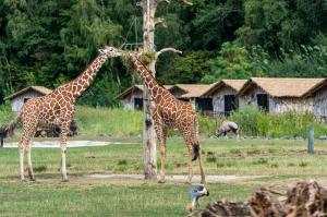 Serengeti-Park-Masai-Mara-Lodges(4)