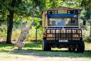Raubtier Safari01k-1