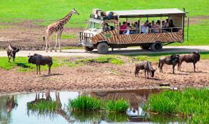 02-Serengeti-Safari