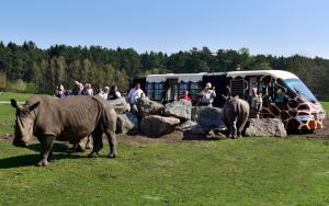 07-Serengeti-Safari (Safari-Express)