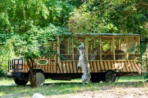 09-Serengeti-Safari (Raubtier-Safari)