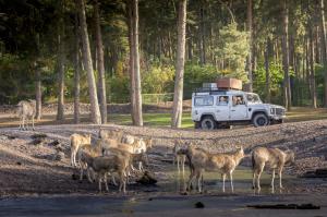 31-Serengeti-Safari (Davidhirsch)
