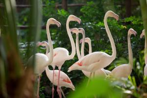 TI Flamingos-03